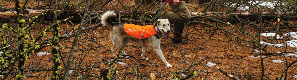 dogsafety_gear_banner